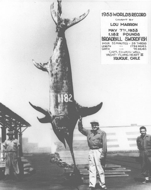 Five Largest Fish Ever Caught