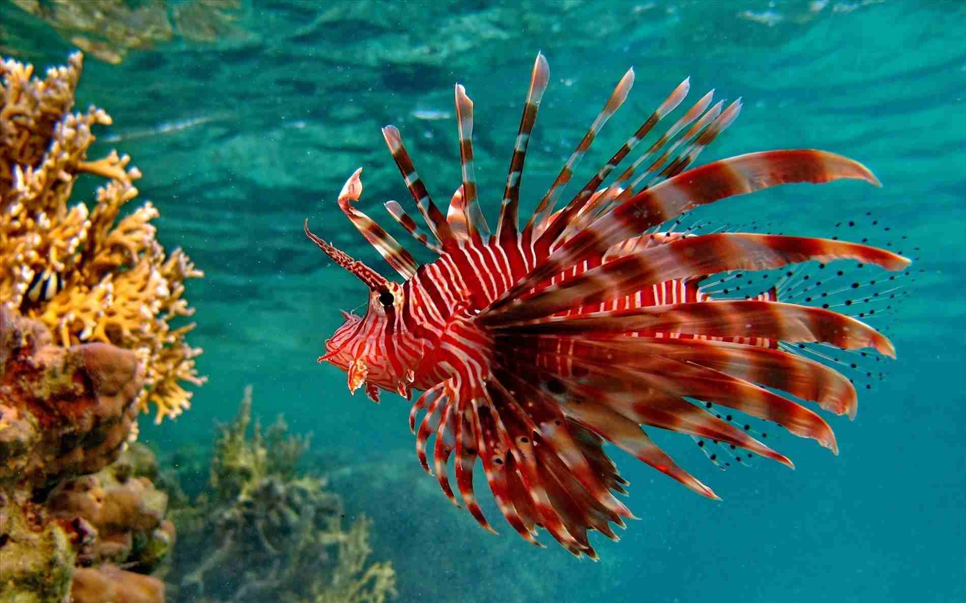 10 of the World's Most Dangerous Fish (Part 1)